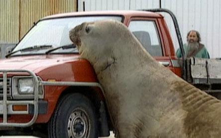 Animals Behaving Badly | Photo Essay | Nature | PBS