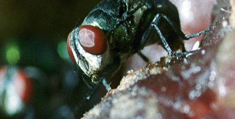 Forensic entomology cases studies
