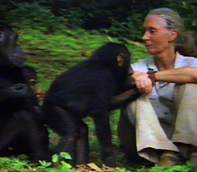 To a little girl growing up in Chimpanzee Jane