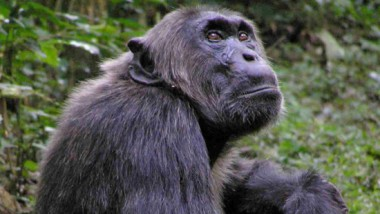 Interview: David Watts, Primatologist