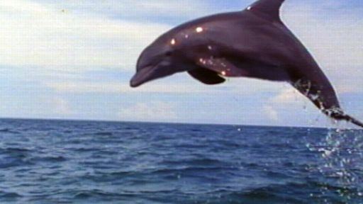 Dophins: Close Encounters
