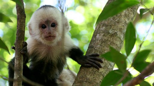 Clever Monkeys | Photo Caption Challenge! | Nature | PBS