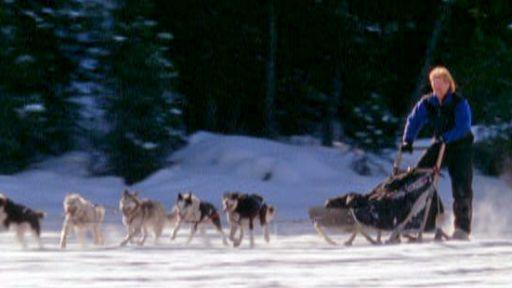 SLED DOGS: An Alaskan Epic