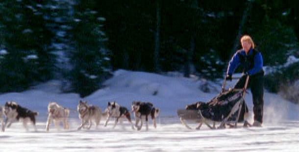 Single dog sled