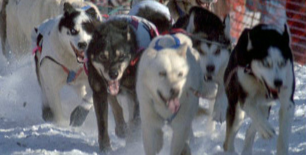 From Sled Dogs to Bulldogs: Home Away from Nome - Gonzaga ...