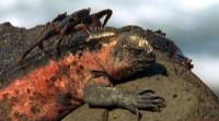 Essays about the basilisk lizard