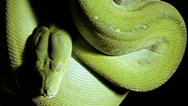 Facts About Reptiles For Kids | Characteristics of Reptiles | Classification of Reptiles