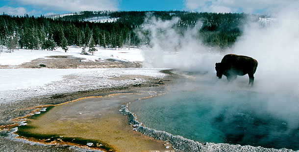 Christmas in Yellowstone | About | Nature | PBS