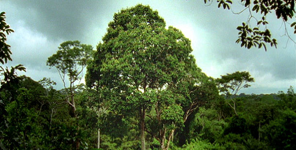 Deep Jungle: Monsters of the Forest | The Amazing Brazil Nut
