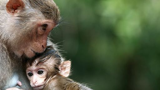 Monkeys and Emotion