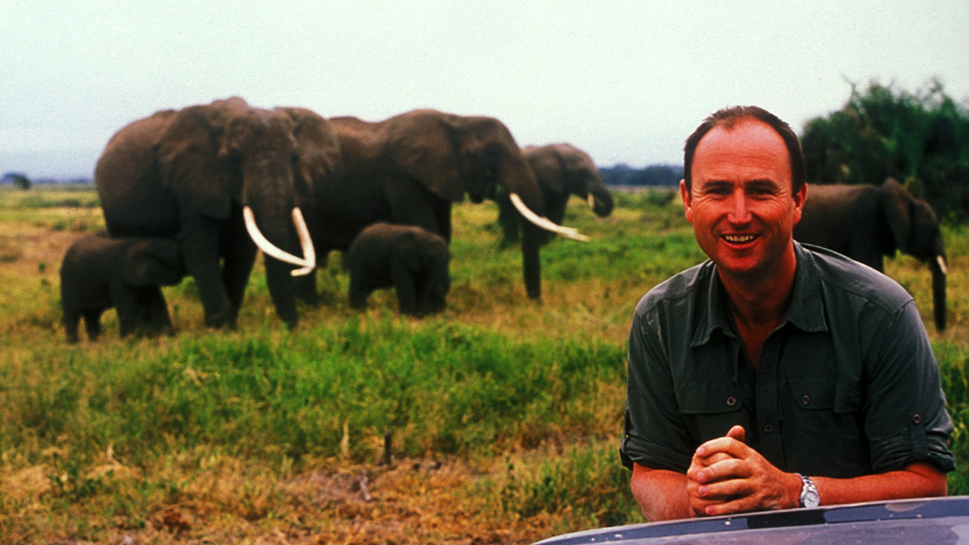 ElephantToRemember-MartynColbeck