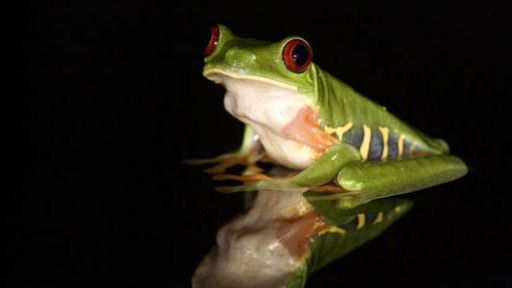 Frogs The Thin Green Line What You Can Do To Help The