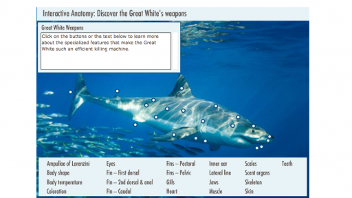Interactive Anatomy: The Great White's Weapons