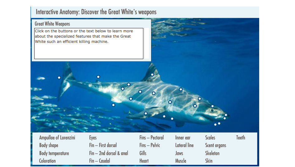 Sharkland | Interactive Anatomy: The Great White\'s Weapons | Nature ...