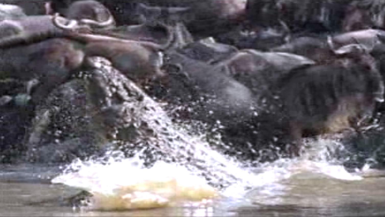 Supersize Crocs | Interactive Crocodile Anatomy | Nature | PBS
