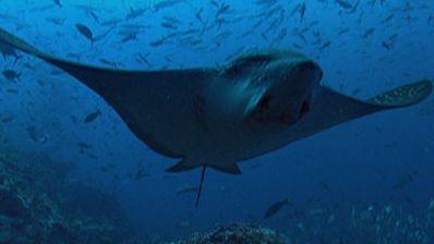 Photo Essay: Underwater Creatures of Cocos Island