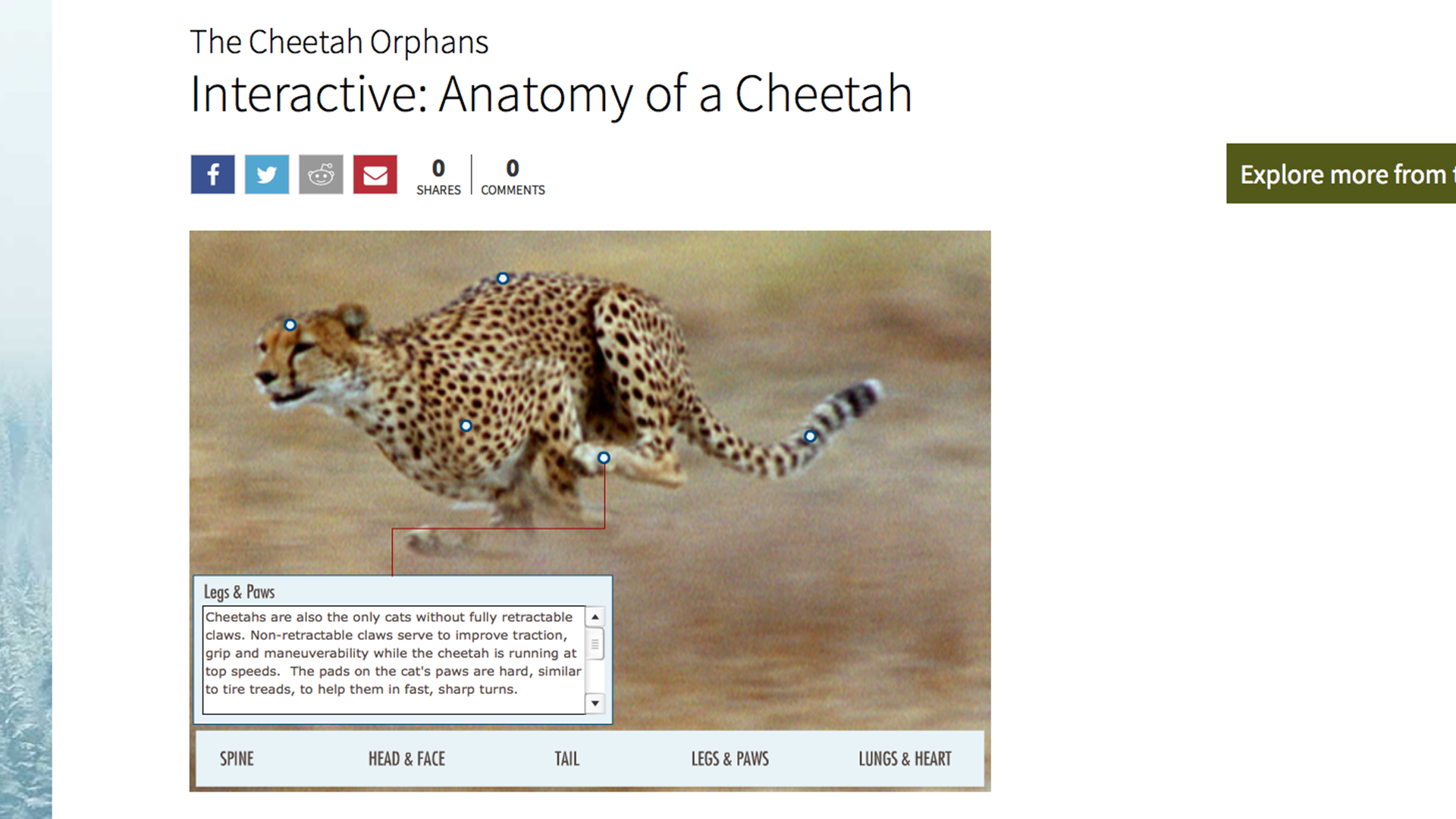 The Cheetah Orphans | Interactive: Anatomy of a Cheetah | Nature | PBS