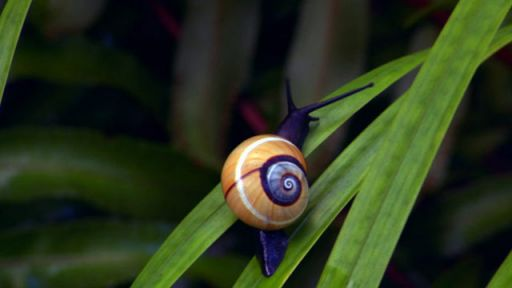 Photos: Snails of Cuba