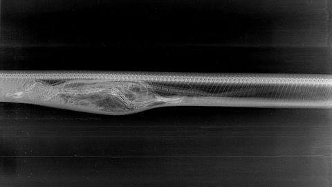 the biochemistry of snake venom essay Pdf   on jan 1, 1993, sp mackessy and others published biology of the sea snakes and biochemistry of their venoms.