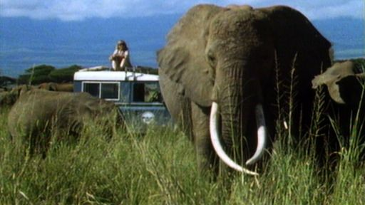 Cynthia Moss, Echo, and the Amboseli Elephants
