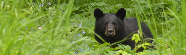 002814-blackbear