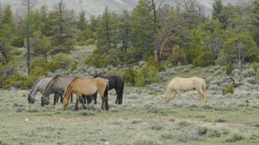 Planning to visit wild horse country?