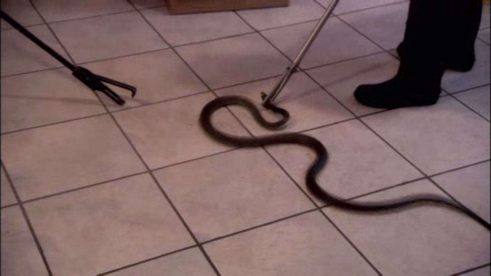 black mamba snake handler thea litschka koen answers your