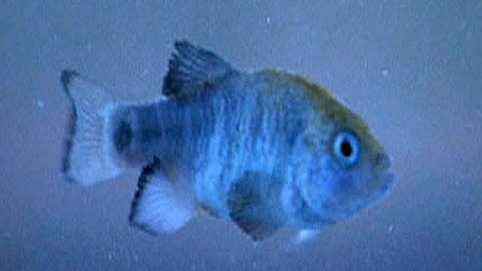 LifeInDeathValley-LittleFish
