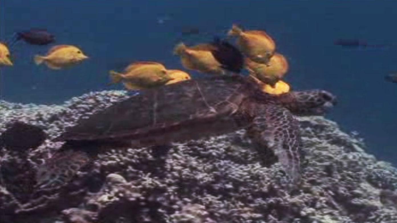 Turtles & Tortoises | Nature | PBS