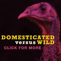 domesticatedwildsmall