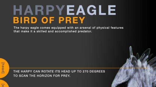 Bird of Prey (GRAPHIC)