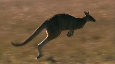 Marsupials: The Evolution Backstory