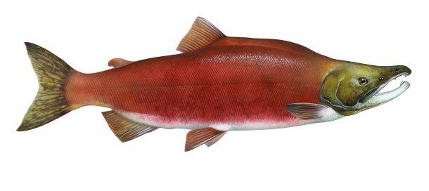 Timothy Knepp/ U.S. Fish and Wildlife Service