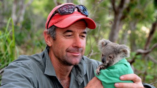 Koala Communication: An Interview with Dr. Bill Ellis