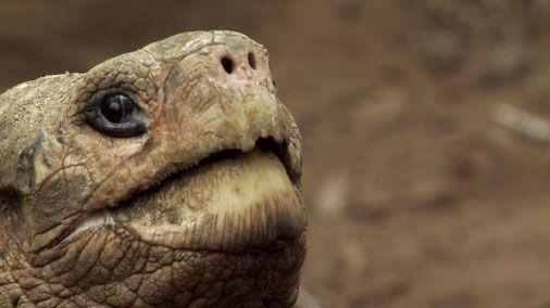 Update: Galapagos Tortoise Lonesome George Dies