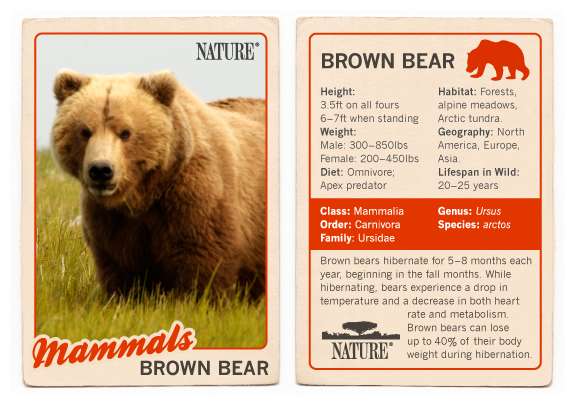 PBS Nature Brown Bear Trading Card