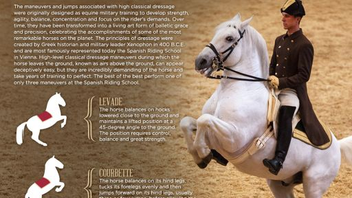 Airs Above the Ground: Classical Dressage Movements of the Lipizzaner Stallions