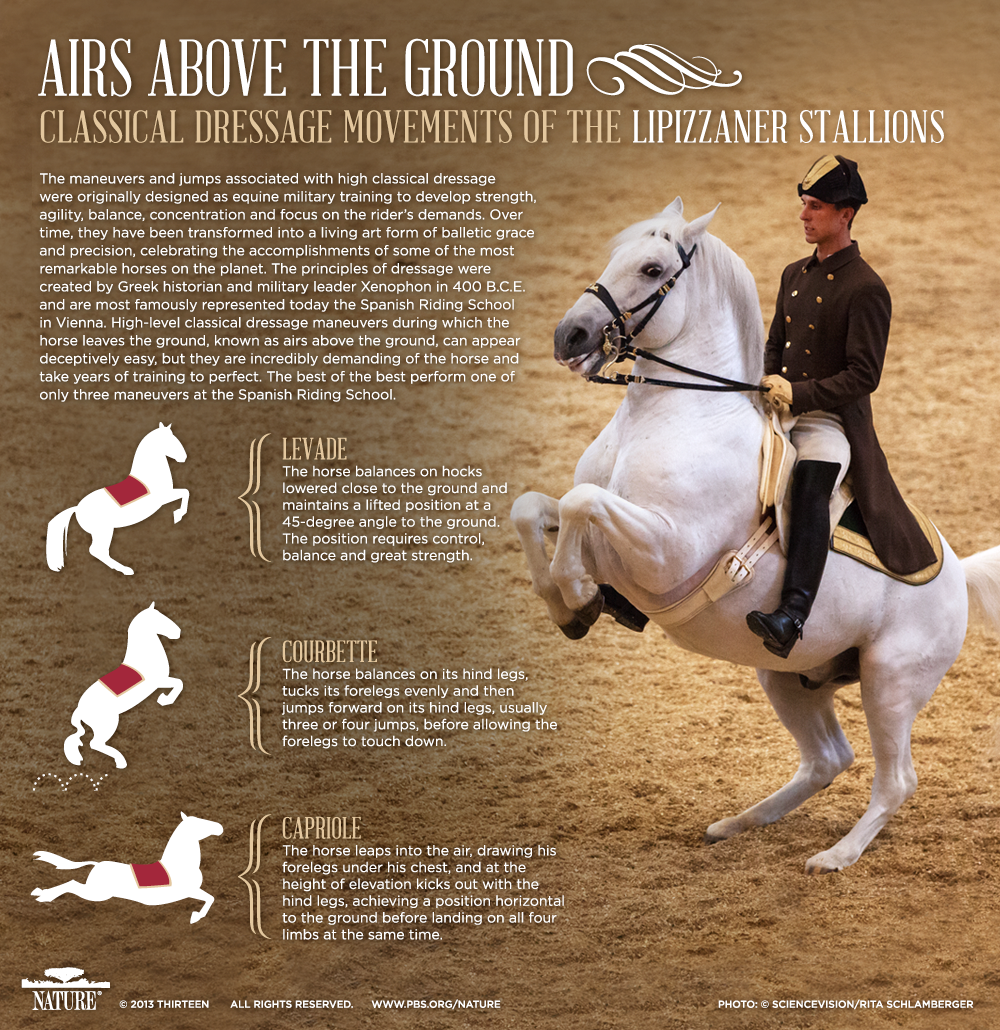 position english riding