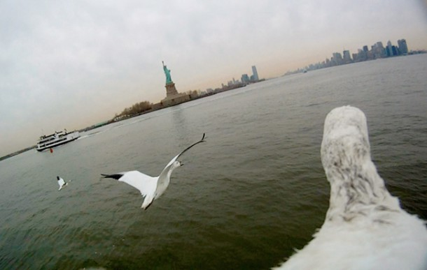 Snow geese flying over Hudson River, New York