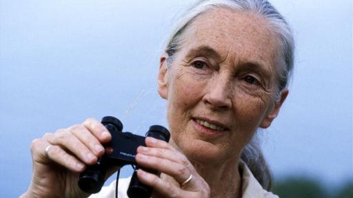 Jane Goodall on Parrots and Parrot Confidential