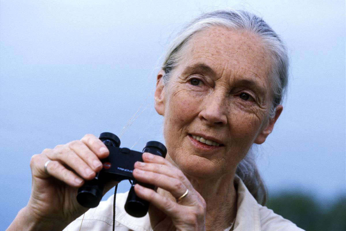 Jane Goodall | credit: www.janegoodall.org