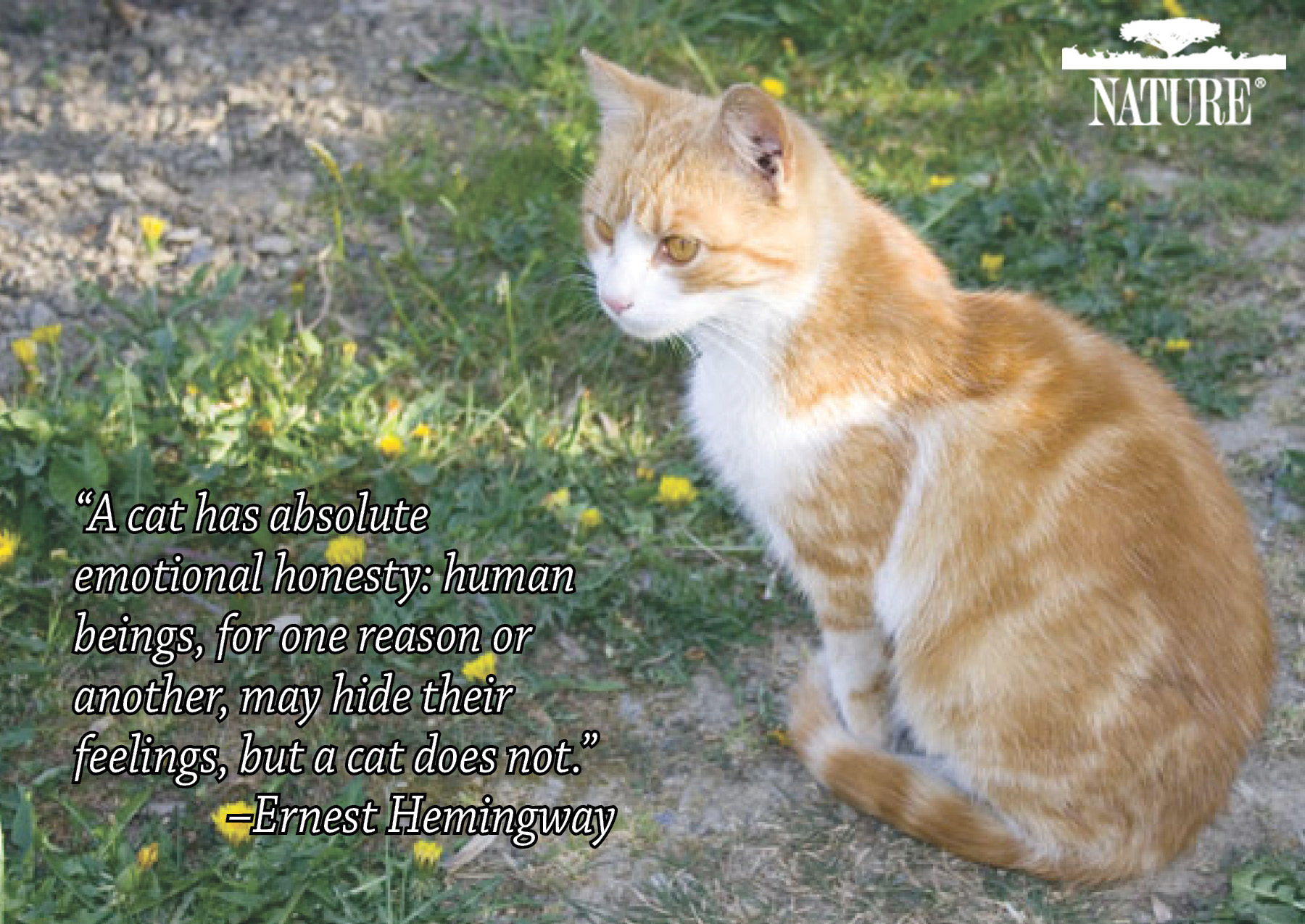 Love Animal Quotes Cat Love Animal Quotes