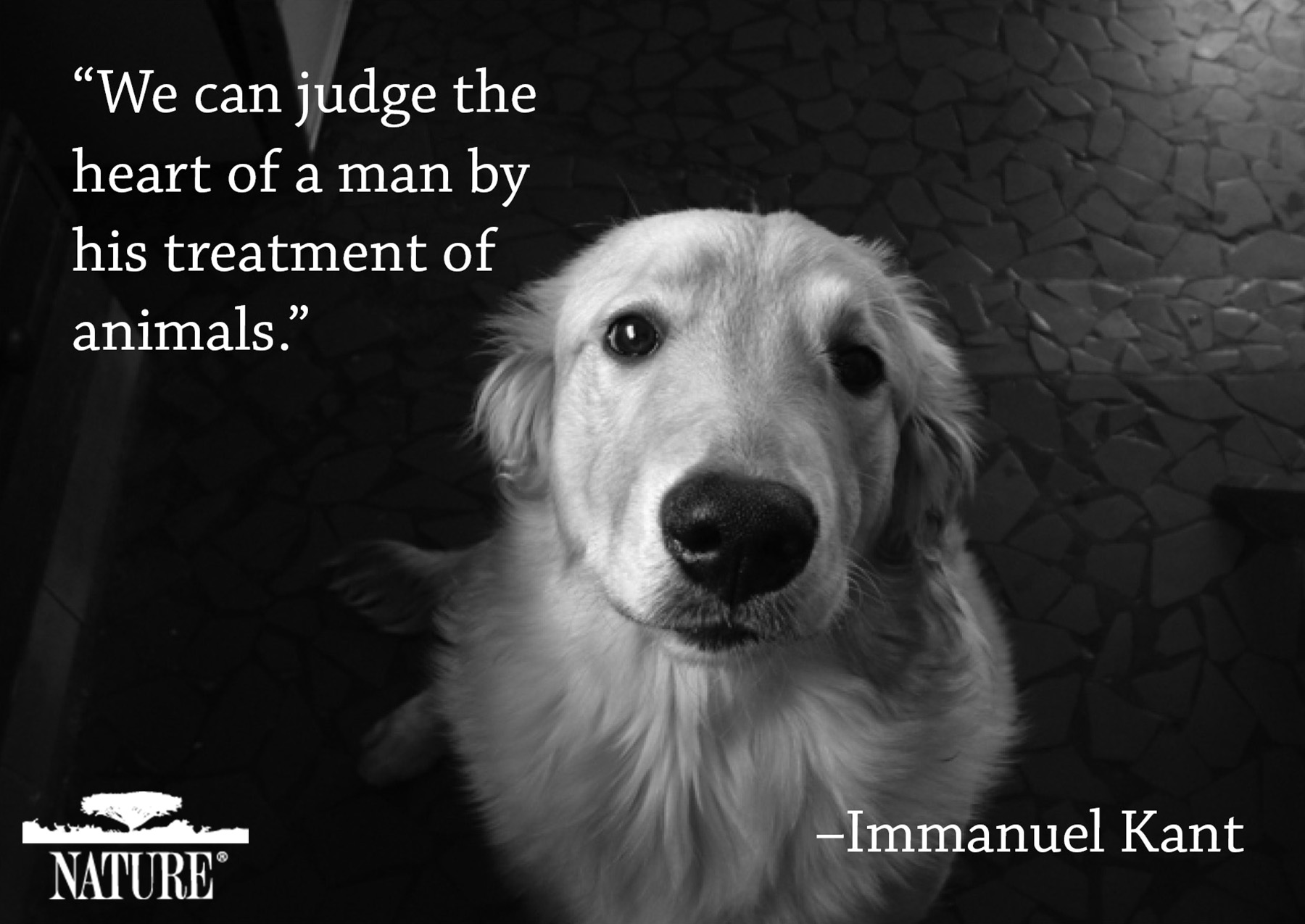 Why We Love Cats and Dogs | Important Pet Quotes in History ...