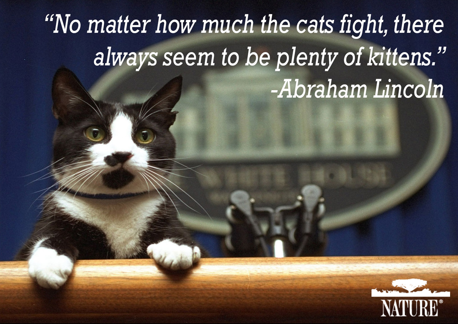 Quotes About Cats Why We Love Cats And Dogs  Important Pet Quotes In History