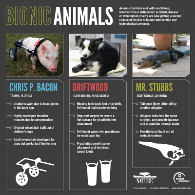 Infographic: Bionic Animals