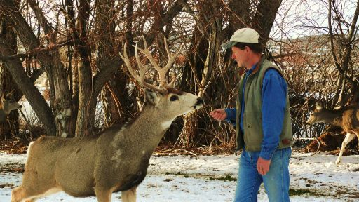 Photos: Living Among The Mule Deer