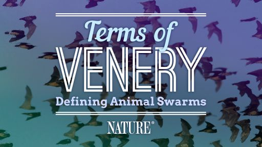 Terms of Venery: Name the Swarm