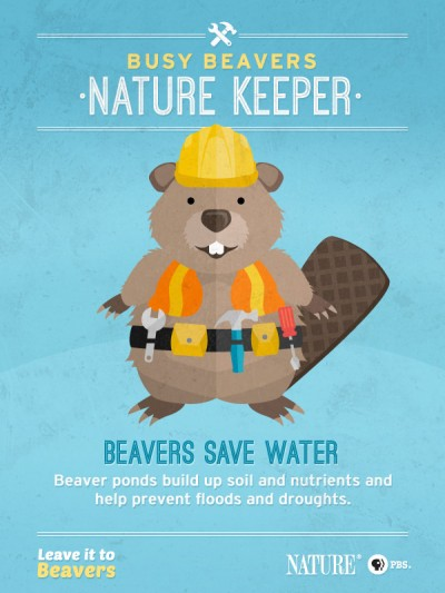 The Benefits of Beavers
