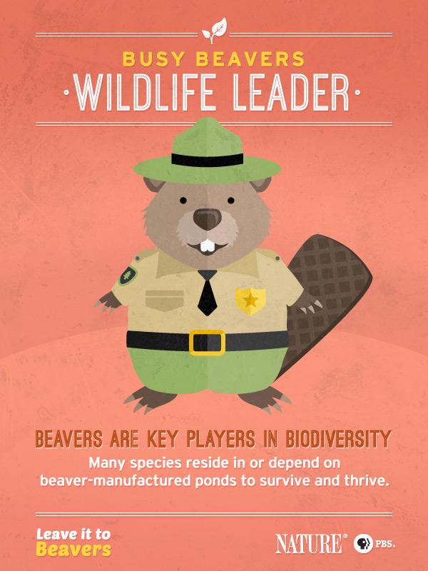 Leave it to Beavers: Wildlife Leader