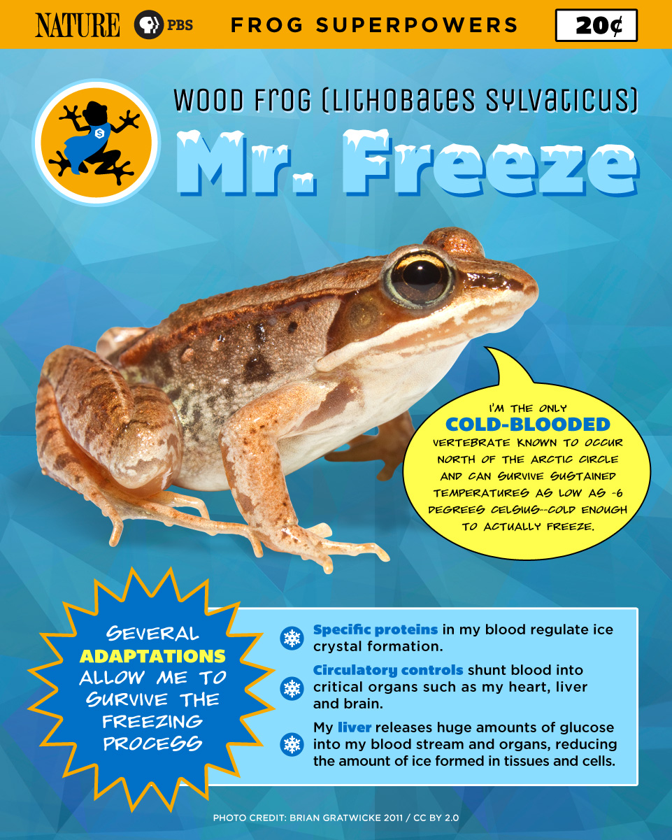 SuperFrog_Freeze